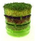 Nasiona na kiełki ekologiczne